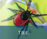 T.B.E